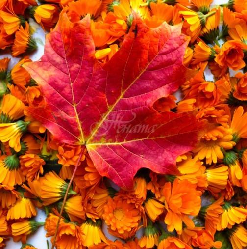 Астропрогнозата на Анжела Пърл за днес, 1 октомври: ТЕЛЕЦ, постигате целта си. ЛЪВ, приятни изненади. ДЕВА, Плодотворен ден