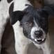 Момче на 9 години е с 48 шева на главата заради дворно куче, което го е нападнало-Видео