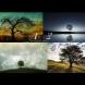 Изберете вълшебно дърво и прочетете експресна прогноза, какво ви чака утре