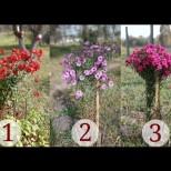 Изберете цветята, които ви се струват най-красиви и прочетете съобщение за предстоящата седмица