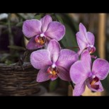 7 елементарни за отглеждане цветя, които и да искаш, не можеш да умориш!