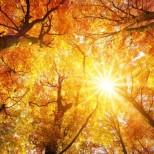 Хороскоп за утре 19 октомври-РИБИ Добър шанс, ВОДОЛЕЙ Материален успех