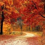 Хороскоп за утре 31 октомври-РИБИ Ползотворен ден, ДЕВА Чудесни възможности