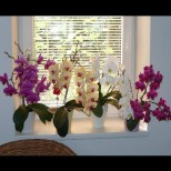 Случайно разбрах рецептата за торене. Всичките ми орхидеи са с цветни стъбла. Никога не е имало такава красота на перваза ми.