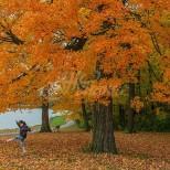 Хороскоп за утре 17 октомври-СТРЕЛЕЦ Добри печалби, ДЕВА Печалби, ЛЪВ Парична сполука