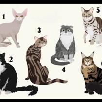 Изберете котката на снимката-Всяка носи различно послание