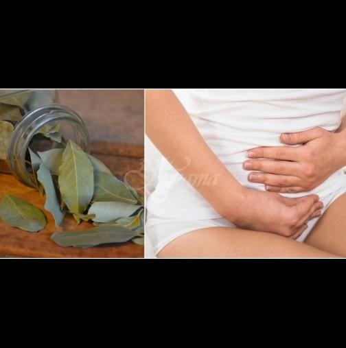 Как да излекуваме цистита за 3 дни с 10 дафинови листа - рецептата, която доказано помага: