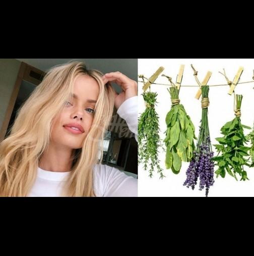 3 вълшебни билки, които спират косопада и укрепват косъма: