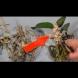 Не изхвърляйте остатъците от мъртвата орхидея. Направете така и след 4 седмици ще се случи чудо! (Видео):