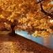 Хороскоп за утре 30 октомври-РИБИ  Материален успех, КОЗИРОГ Изразителна делова сполука