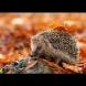 Хороскоп за утре, 25 октомври: ЛЪВ - момент на щастие, СТРЕЛЕЦ - малък конфликт, РИБИ - пари!