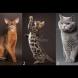 Психологически тест: избраната котка ще ви каже коя черта на характера ви вреди в личния ви живот