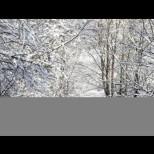 Сибирският студ е близо