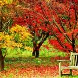 Хороскоп за утре 27 ноември-РИБИ Личен и делови успех, ВОДОЛЕЙ Чудесен ден