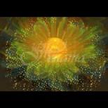 Цвете на щастието сбъдва желанията за няколко дни