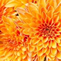 Дневен хороскоп за 24 ноември- Телец-Голяма придобивка, Рак-Постигане на цели