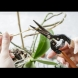 Трябва ли да отрежете дръжките/цветоносите на орхидеята след цъфтежа?