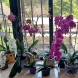 Ботаническата градина ряпа да яде! С тази витаминна бомба орхидеите ми за първи път полудяха от цвят!