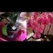 9 елементарни правила, за да ви цъфти орхидеята целогодишно: