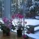 9 натурални разтвора, с които да поливате цветята си през зимата, ако искате да цъфтят и красят дома ви