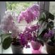 Днес искам да споделя с вас рецепта за тор, която ще превърне вашите орхидеи в приказка.