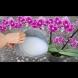 Жива вода за орхидеи - 1 капка и стават пъпка до пъпка! Няма да спрат да ви цъфтят: