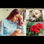 3 красиви домашни растения, които обричат стопаните си на вечна самота и изсмукват жизнените сили  (Снимки):