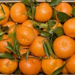 Турските продавачи се надпреварват помежду си как да намерят най-сладките мандарини без костилки