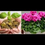 5 стайни растения с мощна енергия, които привличат пари в живота - засадете само едно и удряте джакпота!