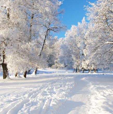 Хороскоп за утре 19 януари-РИБИ  Благоприятен ден, ДЕВА Силен шанс и силна нервност