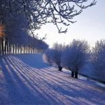 Хороскоп за утре 26 януари-РИБИ Успешни действия, ТЕЛЕЦ Търпението води до успех