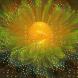 Цвете на щастието изпълнява желания за 2-3 дни