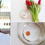 Пуснах 1 стотинка във вазата с цветята, резултатът е изумителен