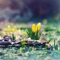 Хороскоп за днес 28 февруари-Везни-Най-хубавите неща, които може да ви се случат, Риби-Изпълнение на желанията