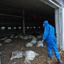 Откриха първите случаи на хора, заразени с високоинфекциозен вирус на птичи грип, прехвърлен от птица на човек