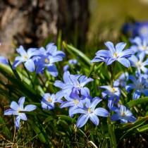 Седмичен хороскоп за периода от 8 до 14 март-ДЕВА Начало на нов житейски етап, РИБИ Силен късмет и значителен успех
