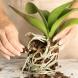 ПЕТ правила за гледане на орхидеи, с които цъфтят през цялата година!