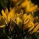 Хороскоп за днес 4 март-Козирог-Сбъдване на съкровено желание, Лъв-Неочаквани радости