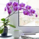 Ето защо трябва да имате орхидея в къщи! Шест причини да държите орхидеи в дома си.