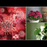 5 домашни растения с мощен антивирусен ефект - пречистват въздуха, унищожават бацилите: