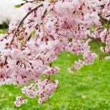 Хороскоп за утре 7 април-СТРЕЛЕЦ Изразителен шанс, ТЕЛЕЦ Продължителността на успеха не е гарантирана
