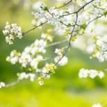 Хороскоп за утре, 18 април: ЛЪВ, добра реализация! ДЕВА, ползотворни възможности! СКОРПИОН, избягвайте споровете