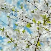 Хороскоп за утре 15 април-ВОДОЛЕЙ Финансов успех, СКОРПИОН Късметът е с вас