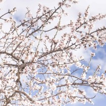 Хороскоп за утре 17 април-СТРЕЛЕЦ Финансова реализация, ВЕЗНИ Здраве и шанс
