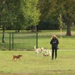 Наблъскани с отрова кренвирши убиха пет кучета в градинка в София