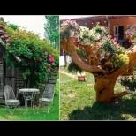 Цветни идеи за двора и градината (Снимки):