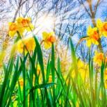 Хороскоп за днес 9 май-Овен-Забавление с верни приятели, Близнаци-Ден за изпълнение на желанията
