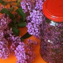 Чупим лилавите и бели клонки за букети, а и представа си нямаме колко е полезен като лекарство люлякът-Ето най-ценните рецепти!