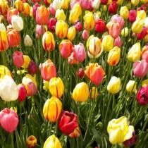 Хороскоп за днес 13 май-Водолеите с чудесни възможности за финансови печалби, ДЕВА Ще ви върви
