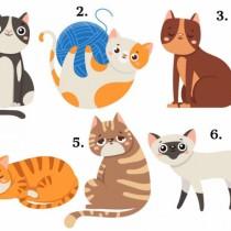 Изберете си котка и вижте какво ще ви донесе